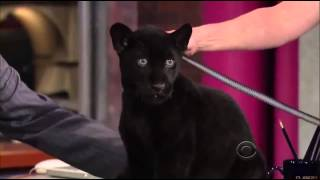 Jack Hanna On David Letterman Show 9 May, 2013
