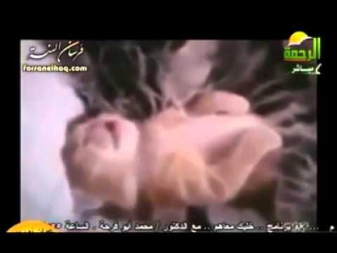 قطة صغيرة نائمة تحلم وترتعش شاهد الذي فعلته أمها