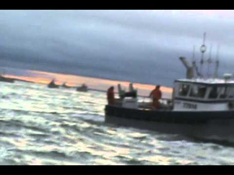 COMMERCIAL DRIFTNET FISHING FOR SOCKEYE SALMON BRISTOL BAY 2012