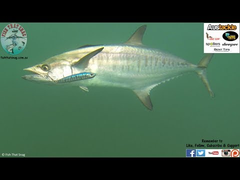 Fish That Snag - Fishing Pressure Points