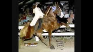 Die Qualen Des Tennessee Walking Horse