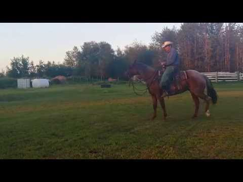 David Kay Horse training,  on roan, first time no rein.