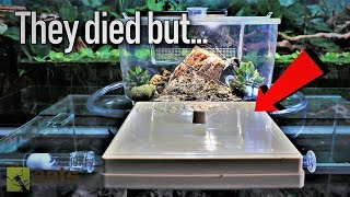 My Ants Died - a huge mix-up