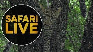 safariLIVE - Sunrise Safari - May, 18. 2018
