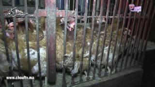 كيداير السوق: شنو أنواع الدجاج الأكثر استهلاكا في رمضان؟ | أش كاين فالسوق