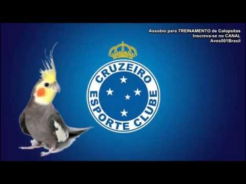 Assobio para TREINAMENTO de Calopsitas   Hino do Cruzeiro MG