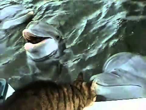 248.vn - Xem mèo và cá heo âu yếm nhau