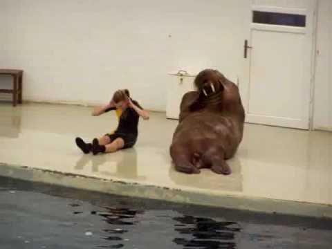 Neuvěřitelná zvířecí rozcvička! :)