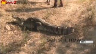 Fisherman catches crocodile in Mahabubnagar dist