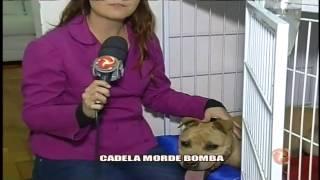 Cadela morde bomba -  22/05/15
