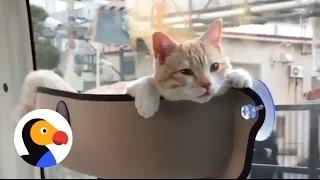 El gato más relajado del mundo