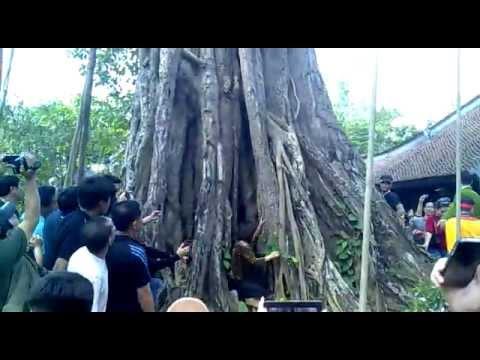 Rắn nhập vào người ở làng Vạn Phúc - HN 09/03/2013