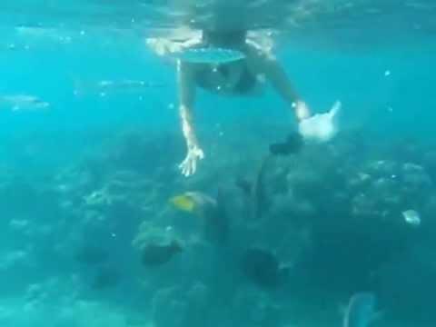 Sirenas reales encontradas vivas en el mar - Imagui