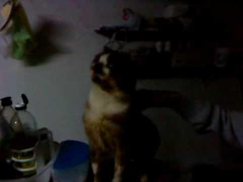 O felino mais feio de Serra Negra...