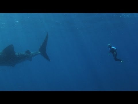 Swim with whale sharks, Ningaloo, Western Australia
