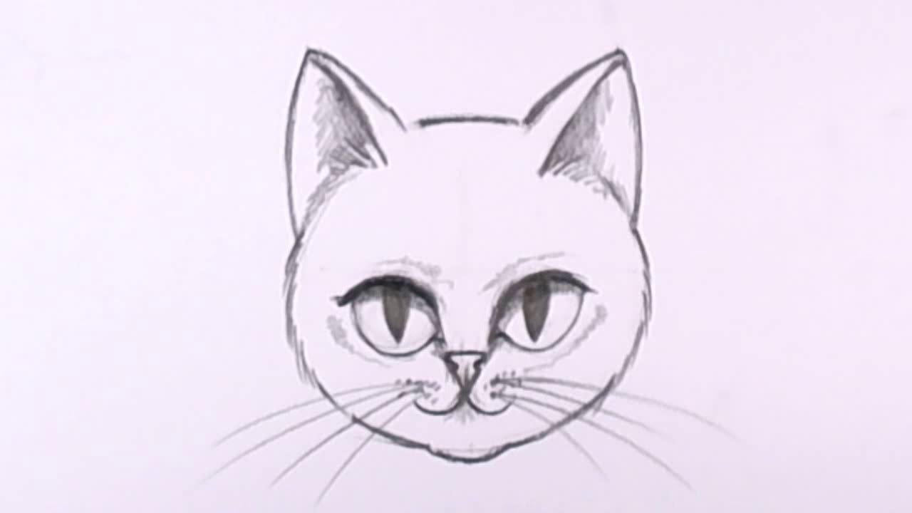 how to draw a cat face in pencil drawing lesson mat