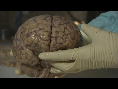 Deep inside the brain - futuris