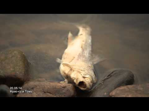 Массовая гибель рыбы в Мрассу