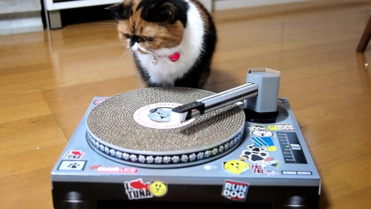 DJ Meme ♪ Cat Scratch Turntable - YouTube