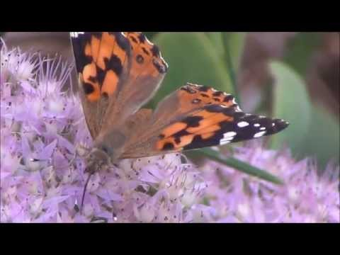 Ep. 355 Up Close Butterflies