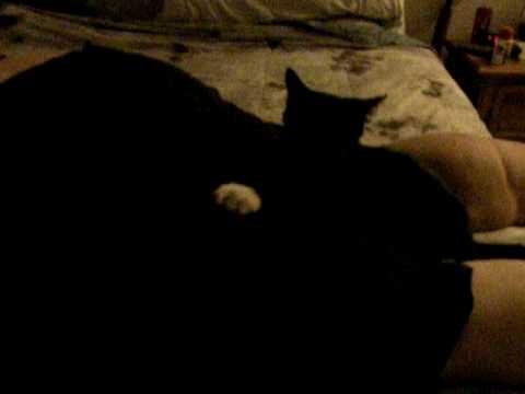 Cat giving butt massage