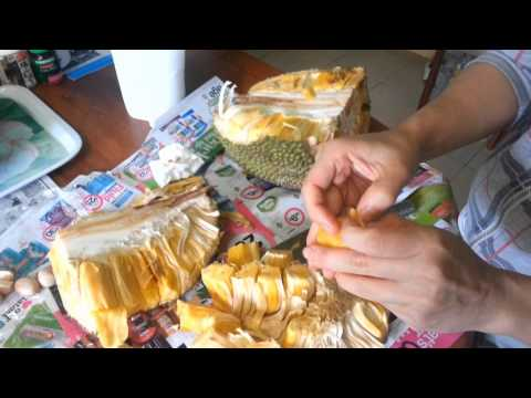 Jackfruit & germinating their seeds