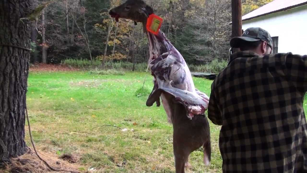 How to skin and quarter a deer youtube