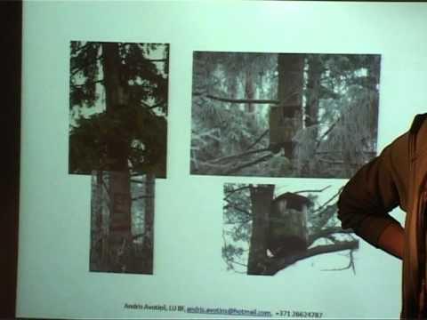 Смотреть видео В Вентспилсском музее проходили Дни птиц