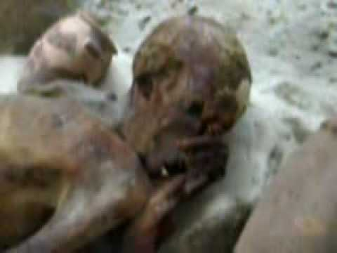 dead body of pharoah found in red sea british museum youtube