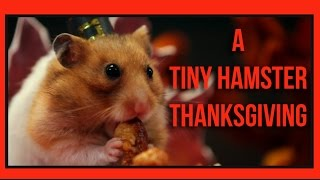 Tiny Hamster Eating Thanksgiving Dinner
