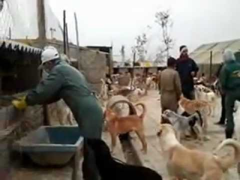 Winter @ Vafa Animal Shelter - Hashtgerd, Iran  - Nov-2012  http://www.cal.ir