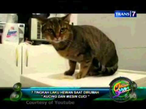 ON THE SPOT 7 tingkah laku hewan saat di rumah