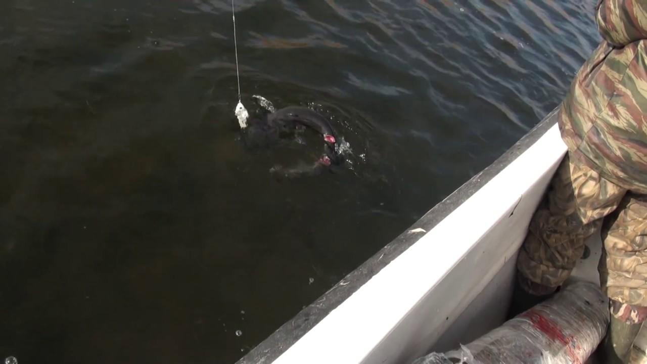невероятное видео на рыбалке