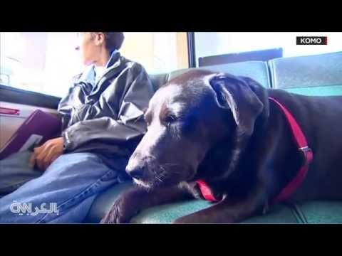 طريف : كلبة تستقل الحافلة بمفردها للتنزه!