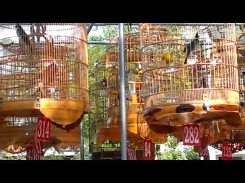 Giải phóng Quy Nhơn 30-03: vài hình ảnh chim chơi đẹp 583