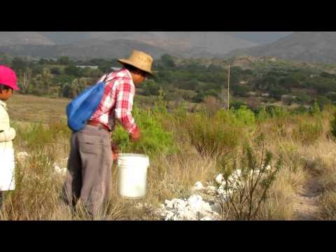 Dia de riego de arboles Tamazulapam