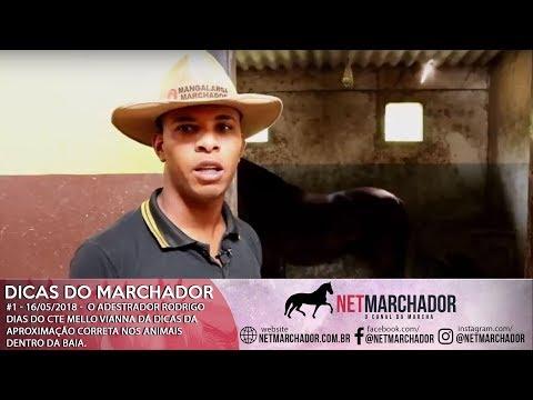 #1 DICAS DO MARCHADOR - RODRIGO DIAS - APROXIMAÇÃO CORRETA - MANGALARGA MARCHADOR