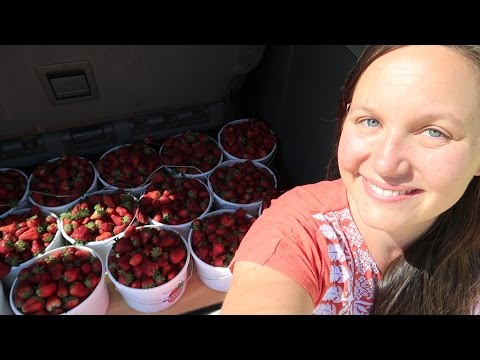 45 Gallons Of Strawberries...Enough Said.