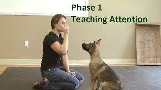 Huấn luyện chó bằng thức ăn thưởng