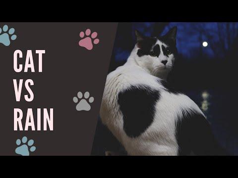 Cat vs Rain