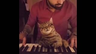 Gatito se duerme mientras su dueño toca el piano