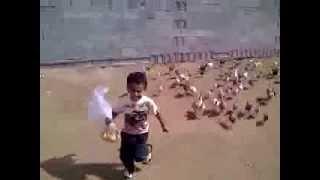 Gallinas persiguiendo a un niño