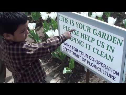 Srinagar - Tulip garden - 1