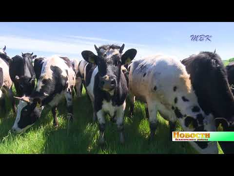 К концу года в ЗАО «Степное» не останется больных лейкозом коров