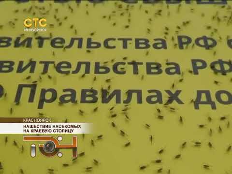 Нашествие насекомых на краевую столицу