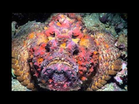 Quái vật dưới đáy biển - những hình thù đáng sợ