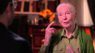 John Oliver: Dr. Jane Goodall and Chimpanzees