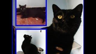 TARIFO: el gato surfero.