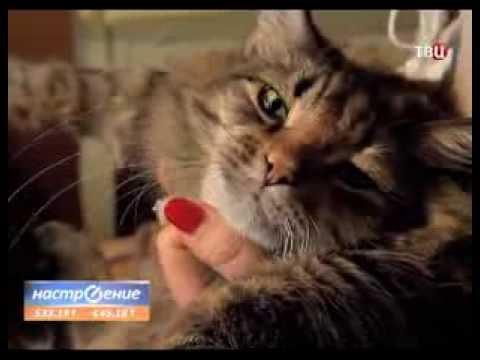 Коты в наших сердцах
