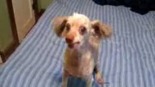 Ugly Dog Makes Weird Noises